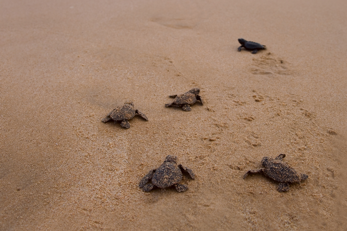 Securing the habitat of turtles