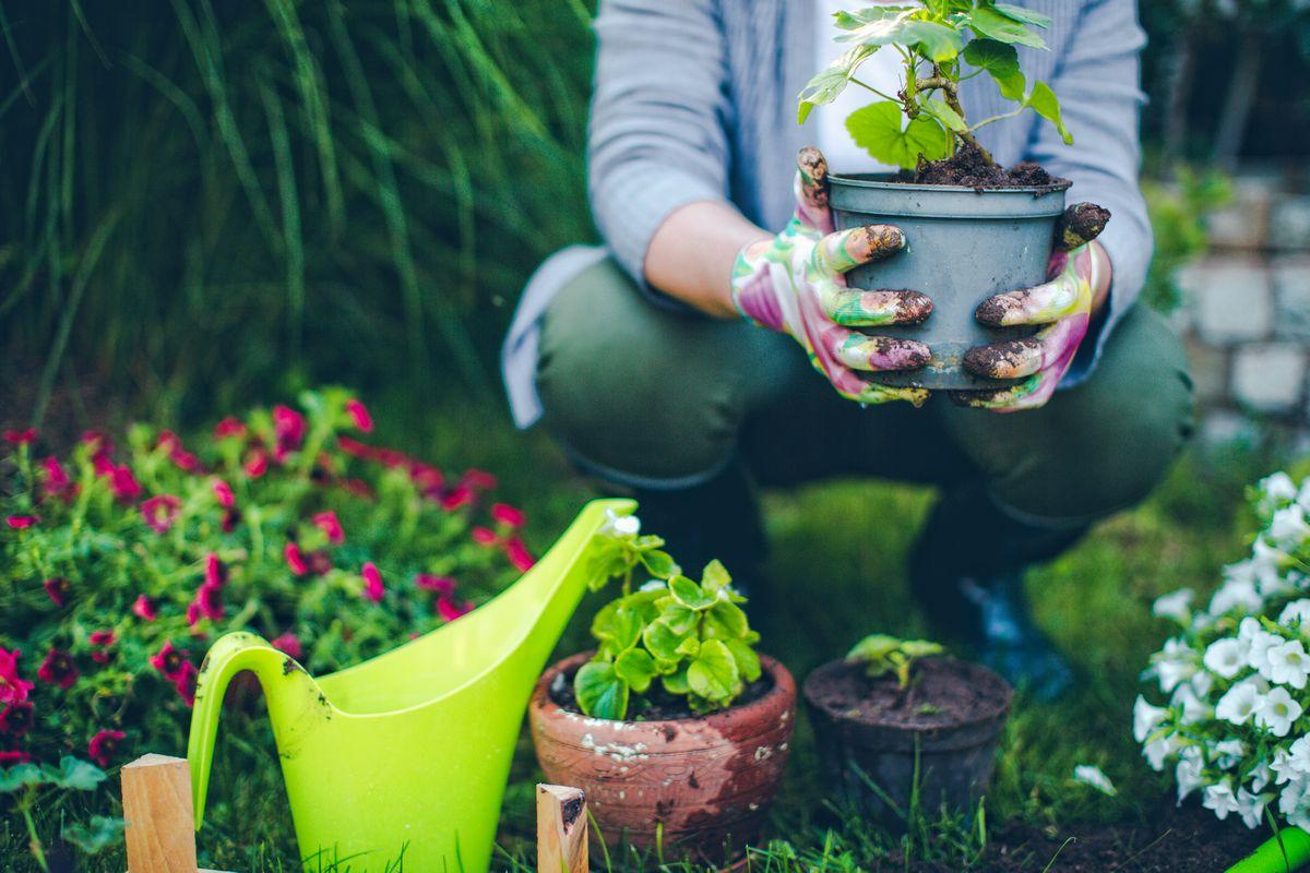 Tips for your flourishing summer garden