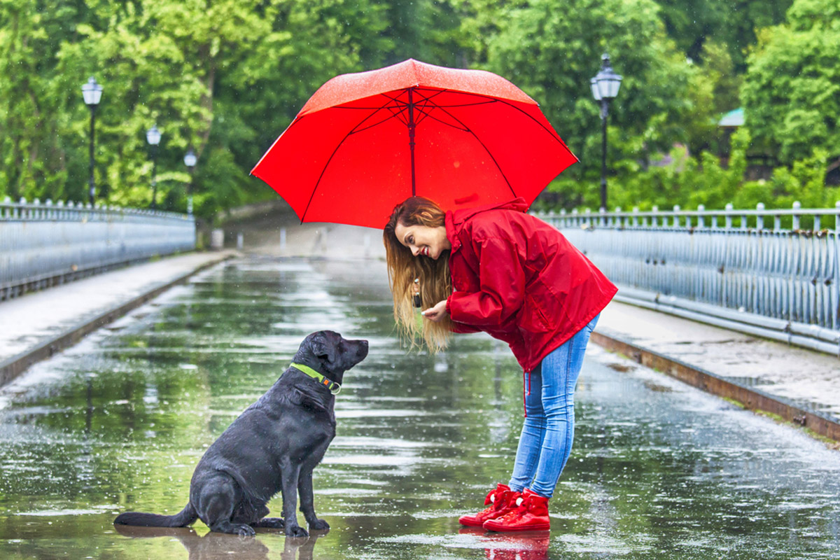 Make your pets monsoon ready!
