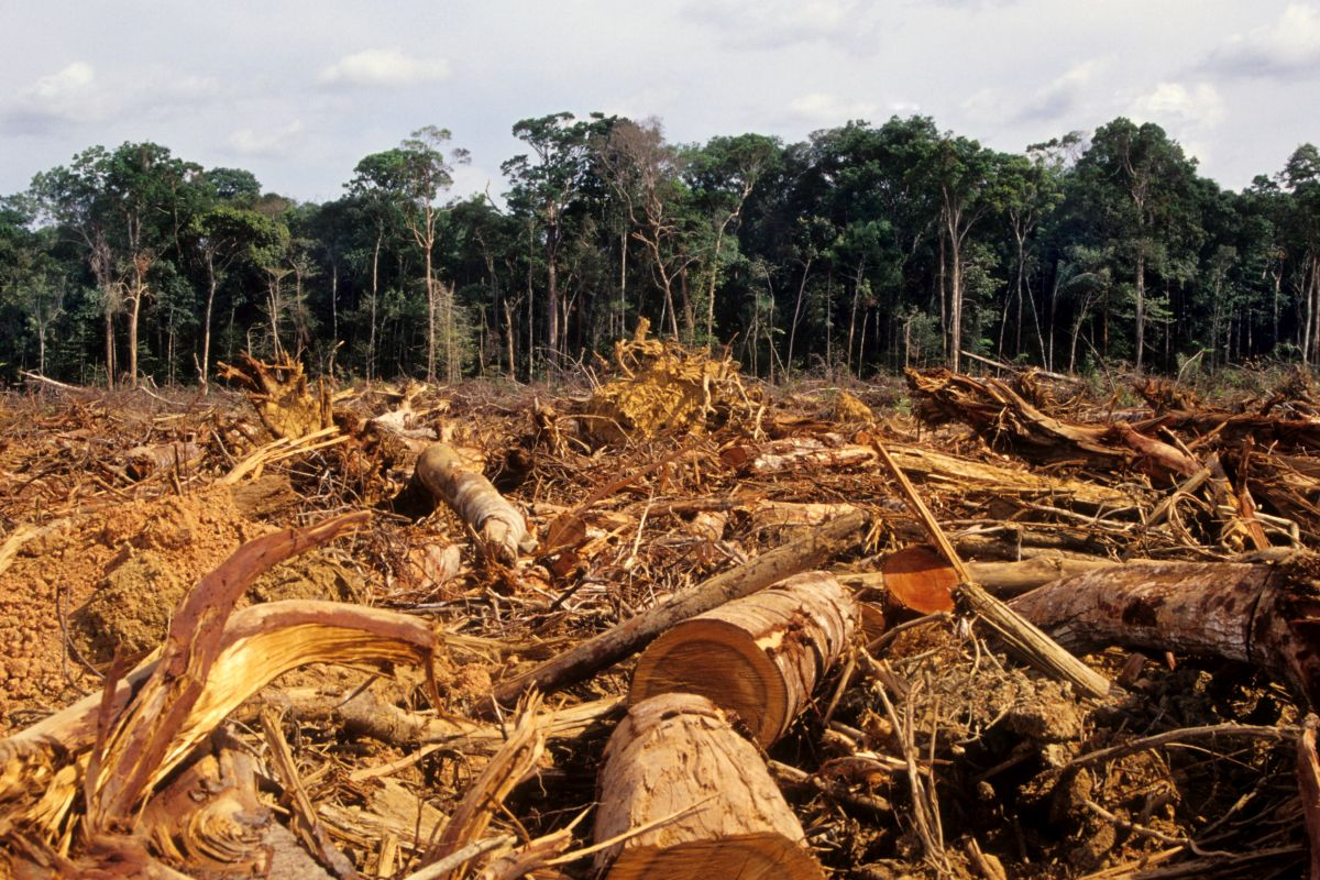 Deforestation, Magnified effect, climate change