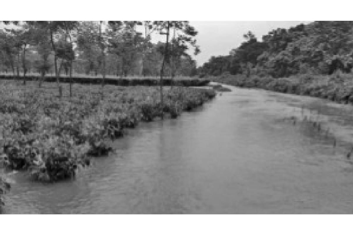 Rainfall, gardens, tea production