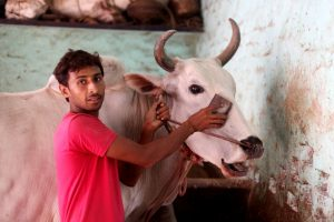 Yogi Adityanath to reward people who take care of stray cattle in Bundelkhand