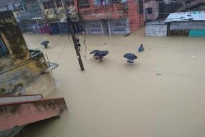 Flood in Raiganj villages