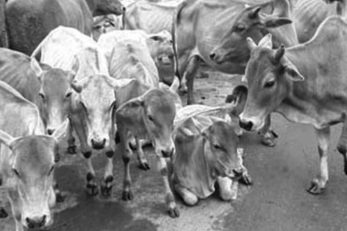 Cow,kamadhenu, Jagat Mata, Gau Mata, UP government
