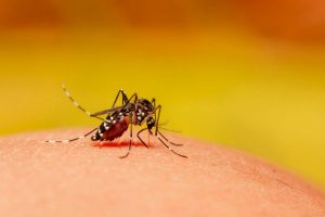 Another dengue death in Hooghly