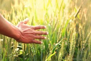 Link rabi harvest to nutrition support