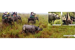 Concerted effort to save rhinos