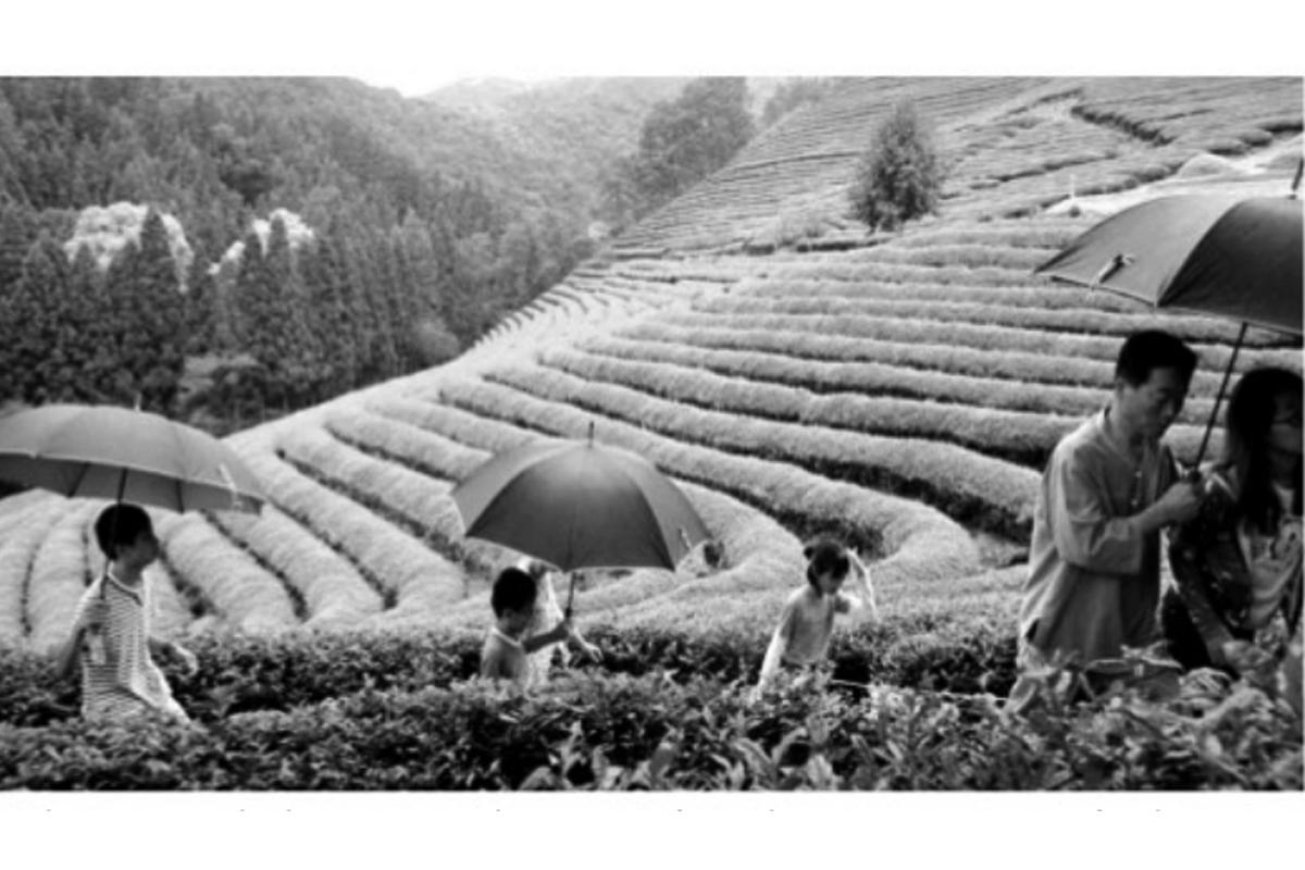 Indian Tea Association, tea industry