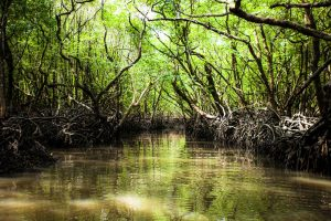 NGT warns of action against destruction of mangroves