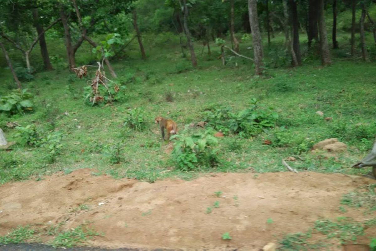 Adivasi as encroacher, South American, Amazon, Nallamala Forest