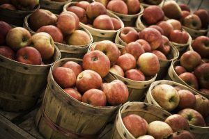 2-day Apple Fest in Shimla to boost tourism
