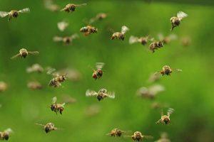 Bees delay Kolkata-Agartala flight