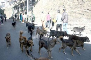 90 dogs found killed with muzzles, legs tied in Maharashtra
