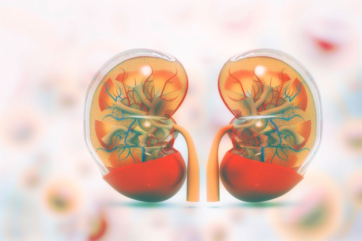 How to cleanse your kidneys in natural way?