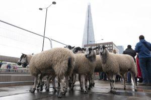 California bans animal fur products
