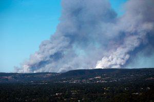 Australia bushfires raze 100,000 hectares of land