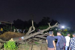 Hacking of trees resumes in Aarey Colony as Section 144 imposed; 29 activists arrested