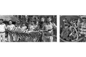 Bhutan men held with Bengal tiger skin, skull