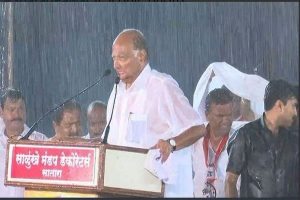 Maharashtra polls: Drenched in rain, Sharad Pawar admits 'mistake' at rally in Satara, wins social media's applause