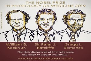 Hypoxia researchers from US and Britain win Nobel Prize for Medicine