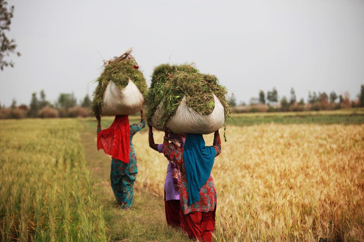 Flip side of farming, Green Revolution, Alan Moore Science, Bertrand Russell