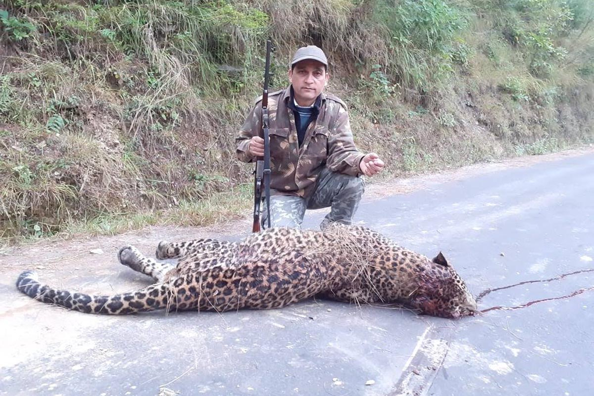 Leopard, Dehradun, Pauri, Garhwal, Uttarakhand
