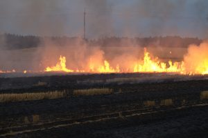 22 IAS officers to curb stubble burning in Punjab