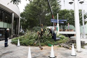 Flights, trains cancelled in Japan ahead of typhoon
