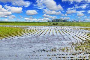 Grim Diwali for maize, cotton farmers as post monsoon rains damage majority of crops in Maharashtra