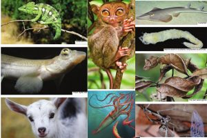 Complex eyes of the animal kingdom