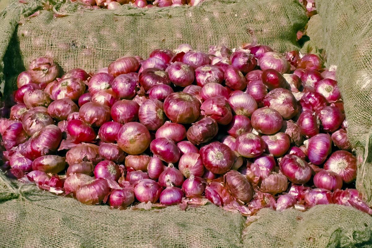 Onion, Bengal, Kolkata, West Bengal