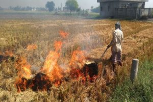 Stubble burning continues in Punjab, Haryana despite SC orders