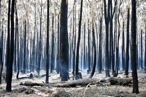3 dead as more than 70 bushfires rage in Australia; destroy scores of homes
