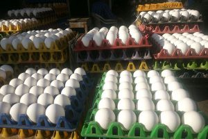 UP man eats 41 eggs to settle bet with friend, dies: Police