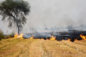 Five farmers booked in Uttar Pradesh for stubble burning