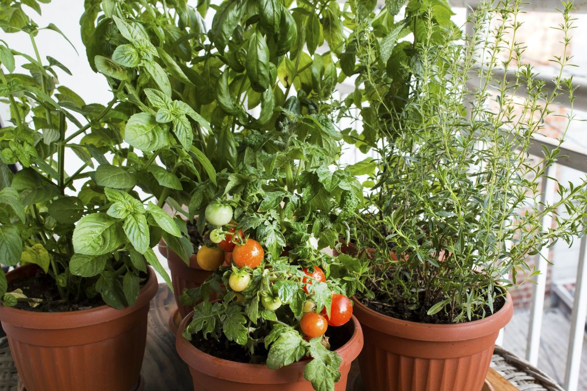 Easy-To-Grow plants that can boost your health