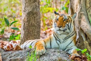 Swedish Royal Couple to tour Corbett tiger reserve