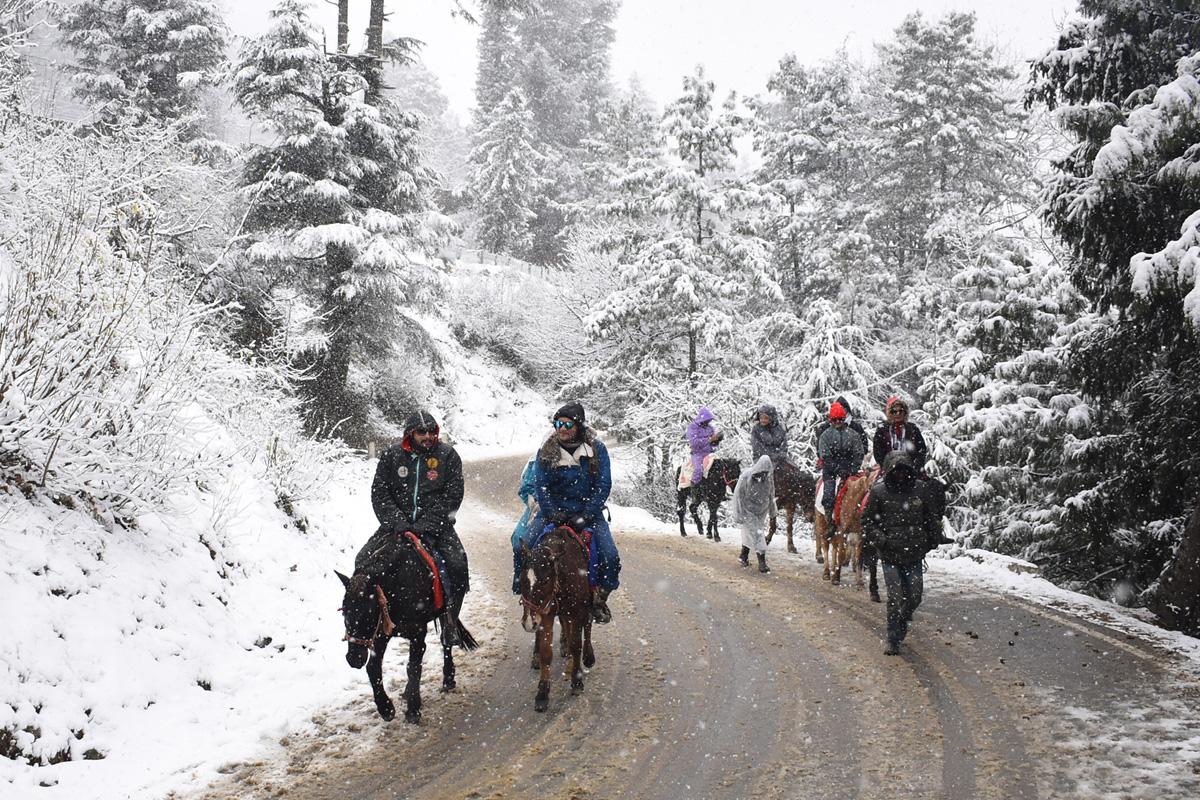 Shimla, Snowfall, Queen of Hills, Himachal, Manali, Lahaul Spiti, Kinnaur, Himachal Pradesh