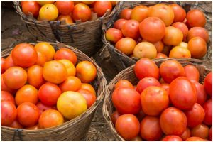Tomatoes are more than a delicious treat!
