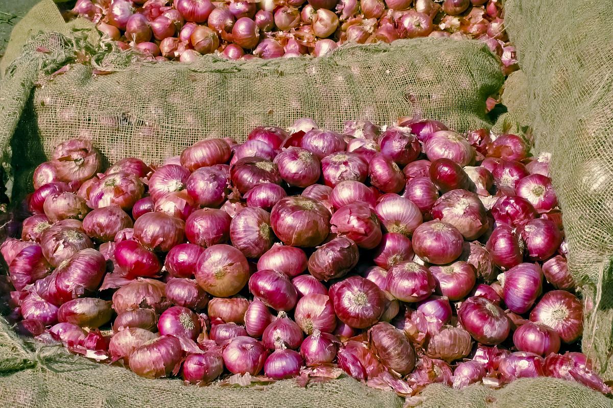 Onions, Sufol Bangla, Bolpur, Birbhum, Kolkata, West Bengal, Bengal