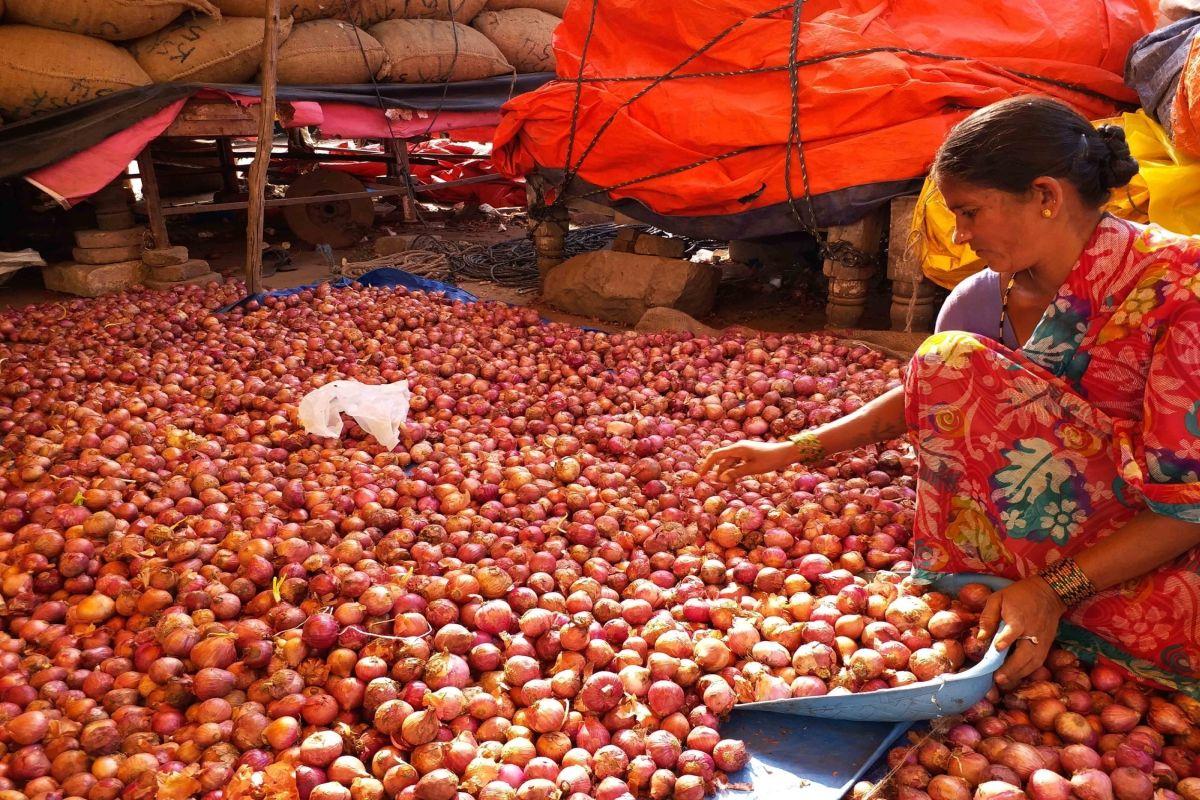 Onion, Nasik, Kolkata, Bengal, West Bengal