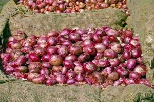 Onion prices set to come down following import from Egypt, Nasik