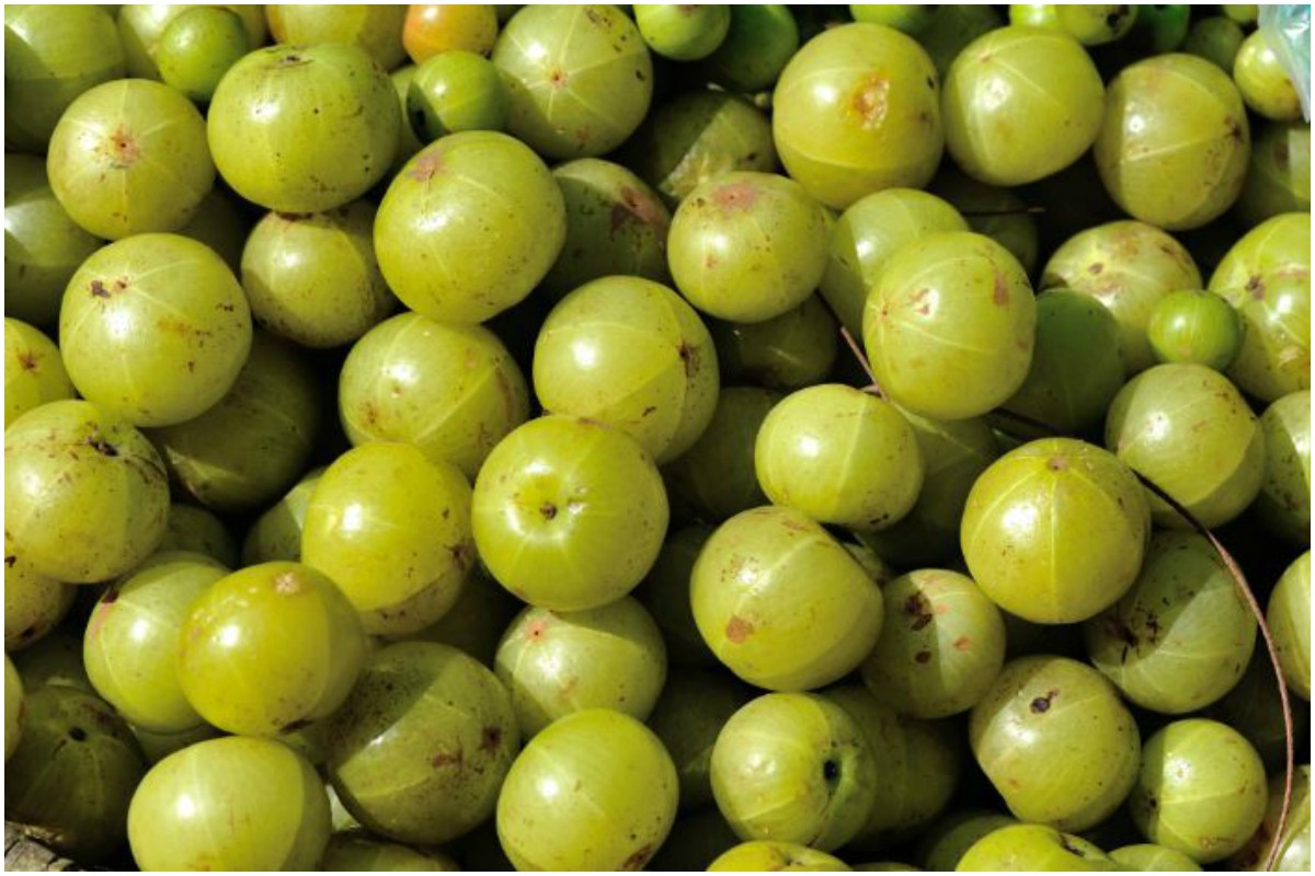 Gooseberry, Amla, Cancer, Diabetics