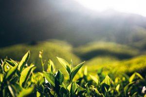 TAI slams Tea Board over non-payment of subsidy