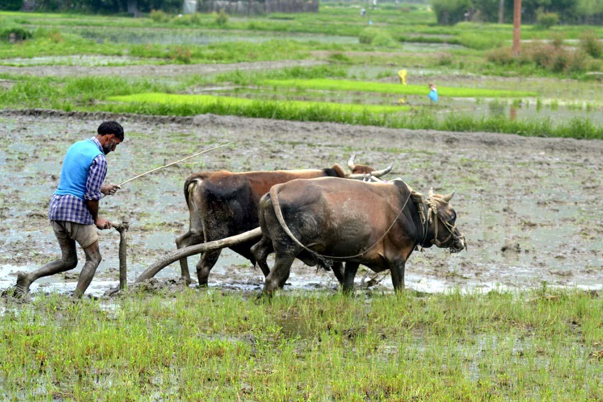 Maharashtra, Agri Export Policy, Uttar Pradesh, Kerala, Nagaland