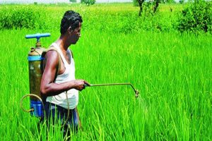 8 states finalise action plan for agri export policy: Govt