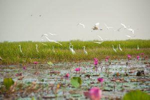Over 11 lakh migratory birds visit Odisha's Chilika lake this winter