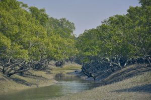 Saving the Sundarbans of crucial importance