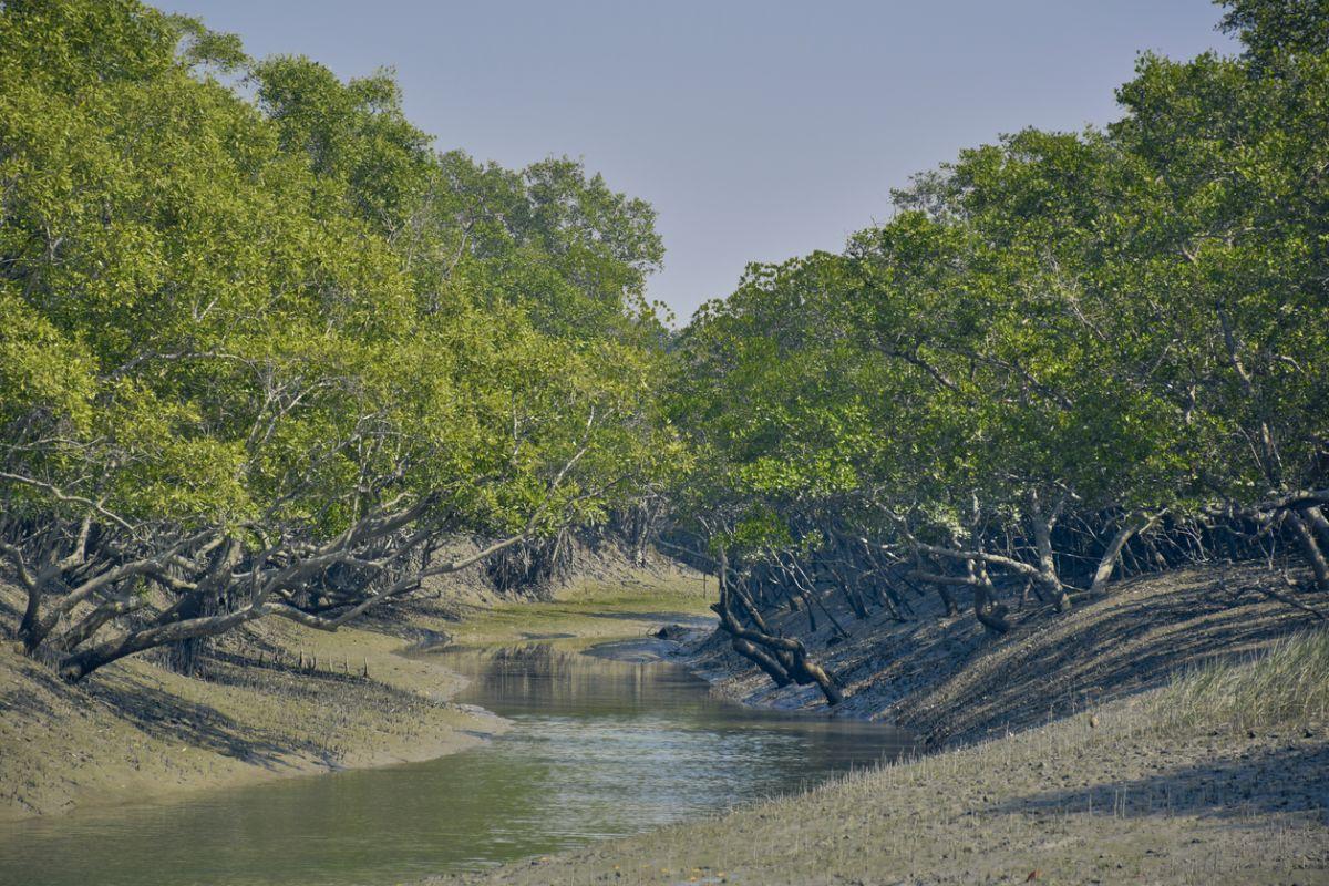 Saving the Sundarbans of crucial importance