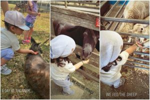 Soha-Kunal's daughter Inaaya feeds ponies, goats at farm
